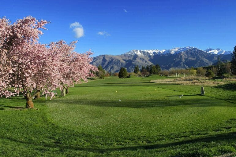 Pink tree blossoming next to tee box at Arrowtown Golf Club