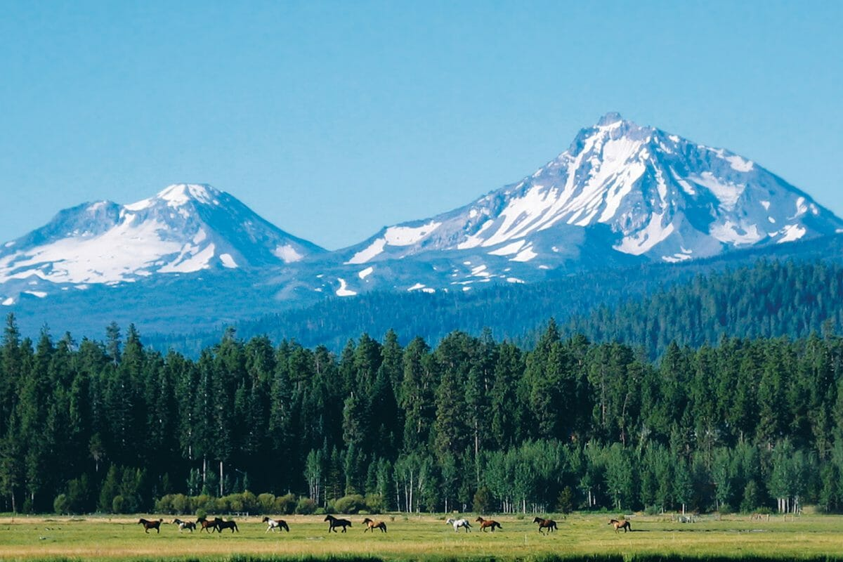 Image of horses on the ranch and distant Cascade Moutains, Black Butte Ranch, Oregon, USA