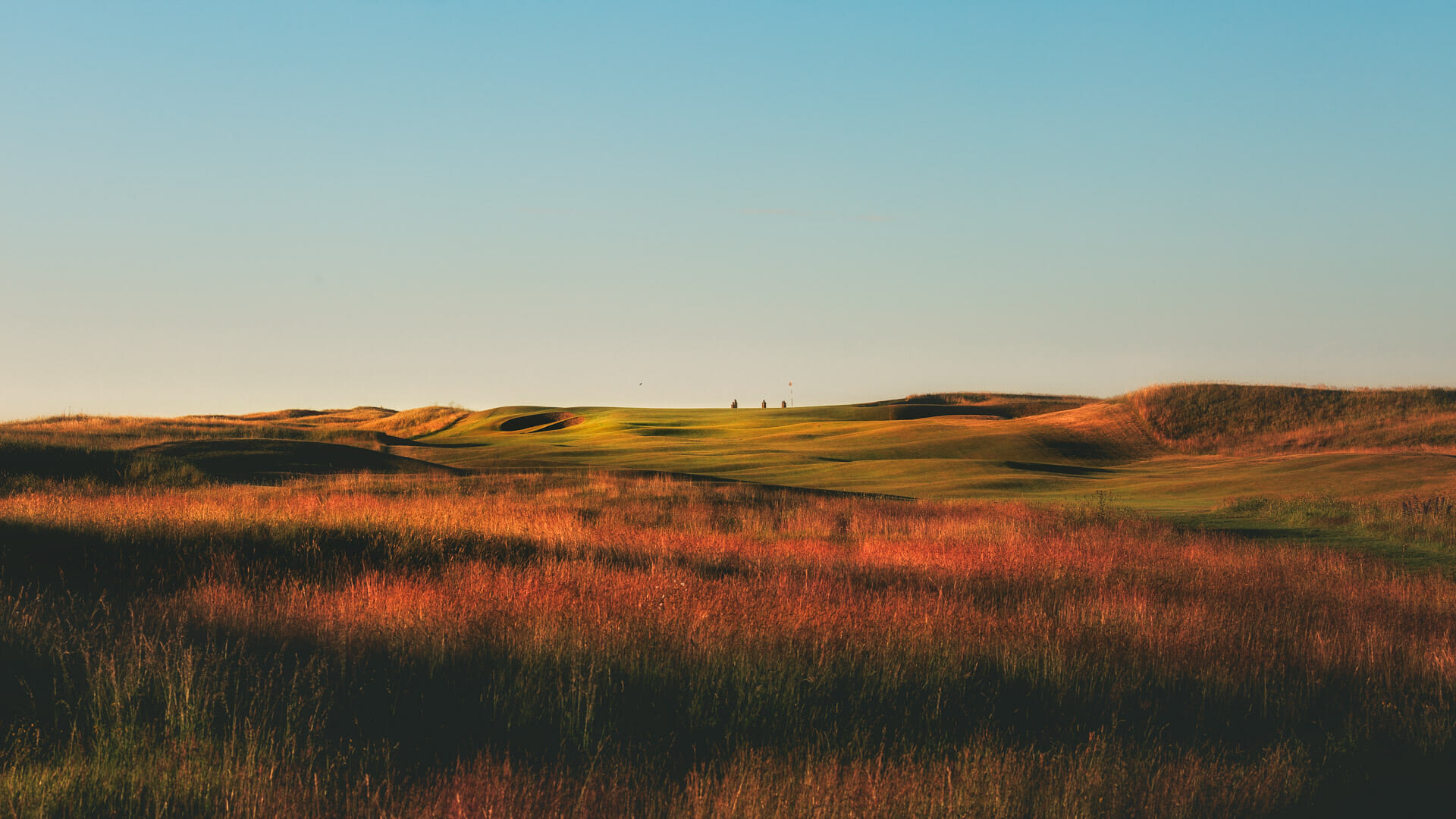 Image of long reeds with golden light touching the golf course at Royal St. George's Golf Course, Kent, England