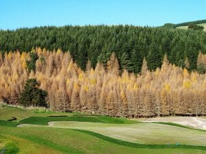 Image of a heavily forested area behind The Kinloch Club Golf Course, New Zealand