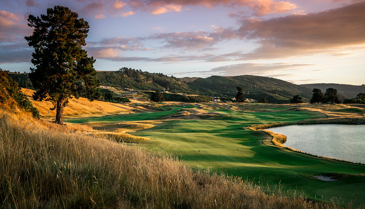 Image displaying a lone tree on the Kinloch Club Golf Course, Taupo, New Zealand