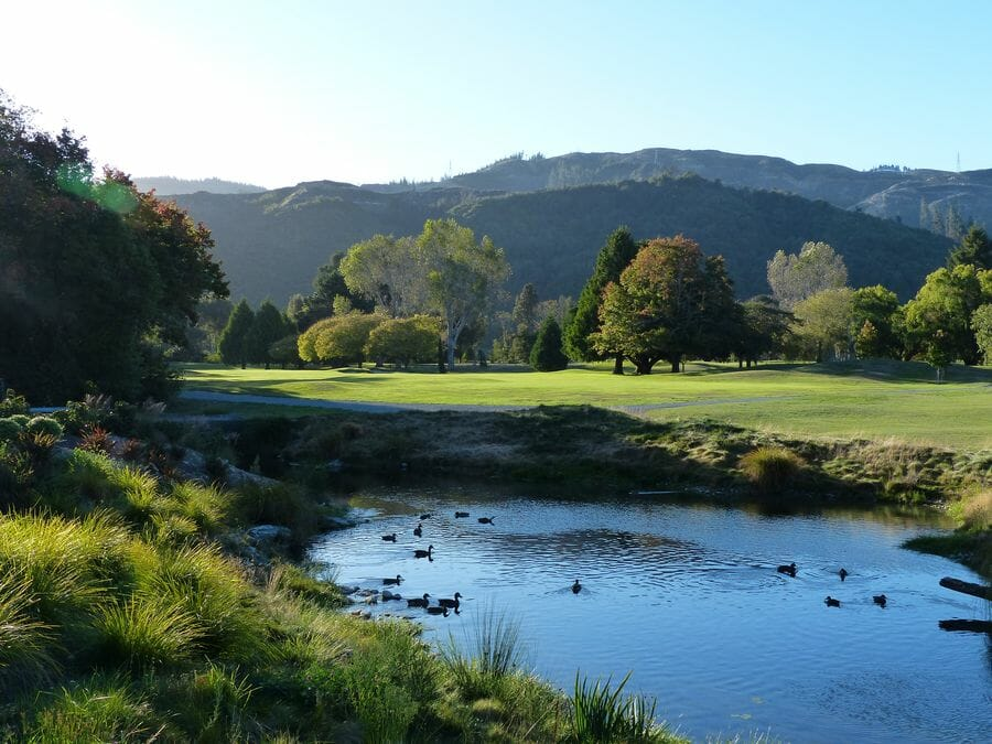 Ducks sit on the golf course lake at Royal Wellington with a rolling mountainous background