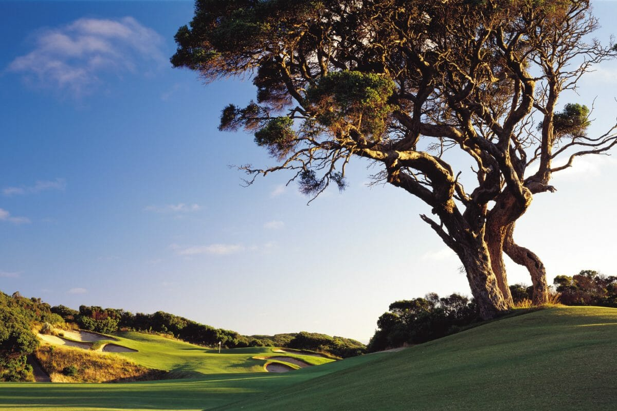 Large gnarled tree overlooks the first fairway at The National Golf Club