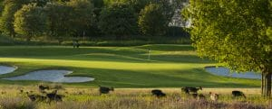 Deer roam free in the foliage of the golf course