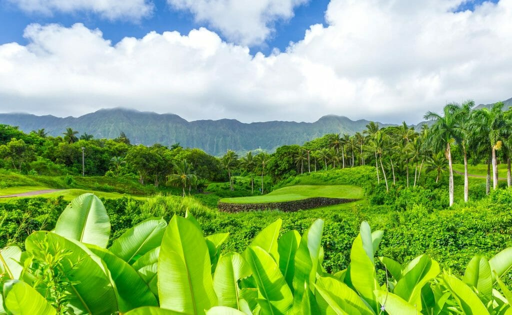 An isolated green blends with Hawaiian vegetation
