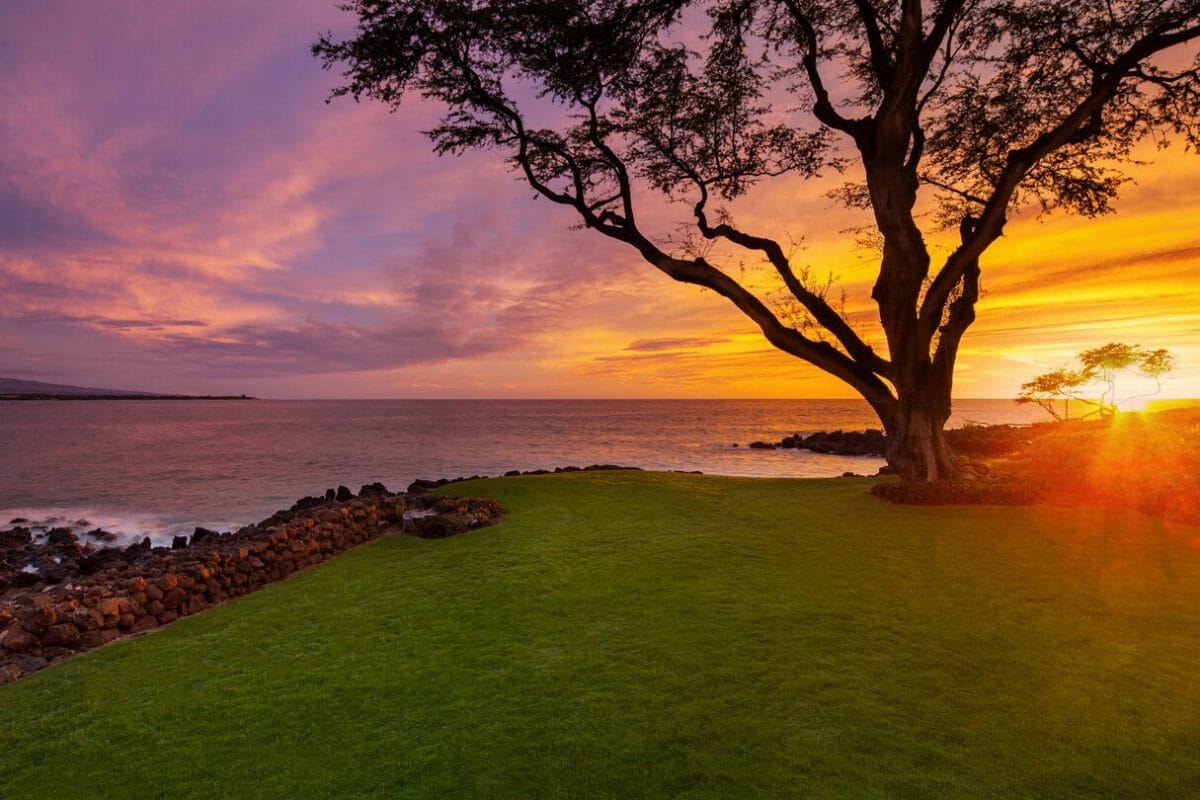 The setting sun casts golden light over a lawn at The Westin Hapuna Beach Resort