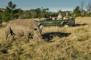 Tourists view a rhino during a game reserve drive
