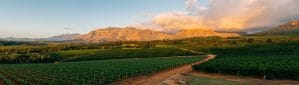 Panoramic view at sunset of the Ernie Else Winery