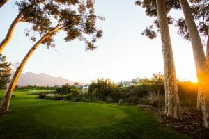Gum tree stands over a tee at Pearl Valley's Golf Course