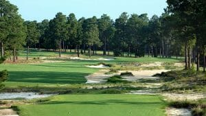 Large pine trees dominate the seventh fairway