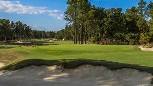Pine trees stand over the golf course